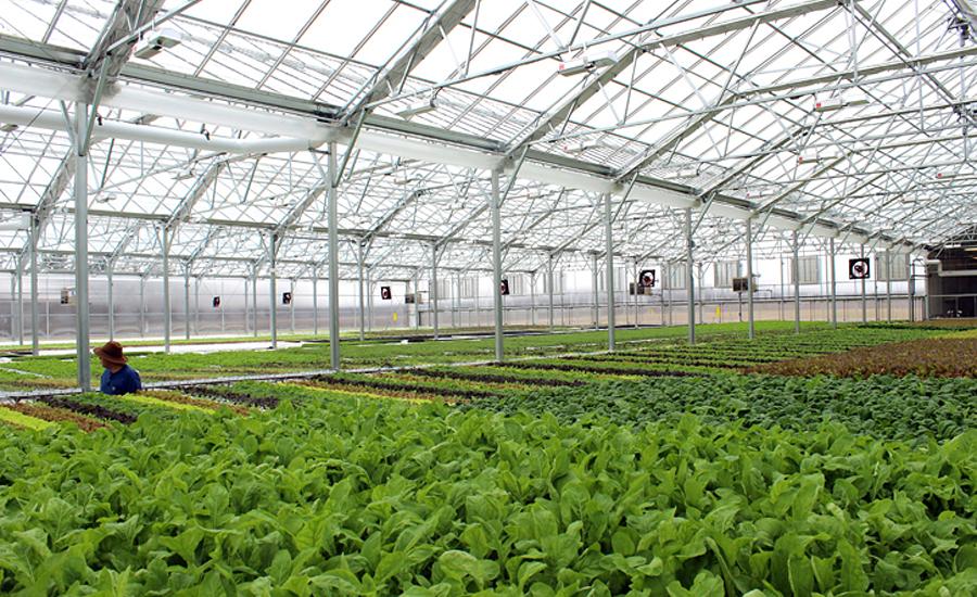 Bright farms project